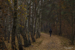 Лес.Ноябрь... / ---