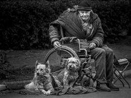 втроем / на улице старик с собаками просит милостыню