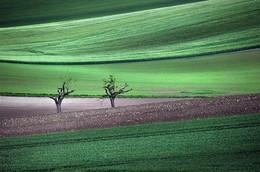 Oceans of Green / Spring arrives in the fields of Burgundy (France)