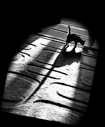 Кошки-мышки... / Рисует солнце тенью на ковре...