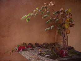 натюрморт с веткой малины / предчувствие осени