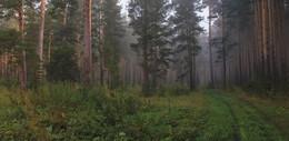 Лесными тропами / описание