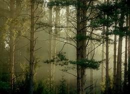 Раннее утро на реке Кубань 7 / Всё то-же утро в Костромской области