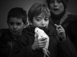 мальчик с голубем / на улице среди группы пацанов