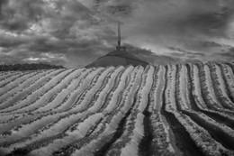 Перекати поле / Весна