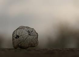 """Перекати-поле / Это коробочка от плодов физалеса, но как она похожа на бездомного странника пустыни, настоящего """"перекати-поле"""".   Справка: Этот вечный странник пустынь, славящийся редким умением выживать без воды и почвы, принадлежит к богатому видами семейству амарантовых {Amaranhaceae) - цветковых растений тропического пояса Америки и Африки.  От себя ещё добавлю  Осень настала, холодно стало ... А птички всё так же клюют, что попало ... Чтоб настроение совсем не упало,  Послушаем Стинга для начала!)))  https://www.youtube.com/watch?v=0dB50HOZYFI"""