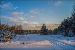 Зимний лес / ***