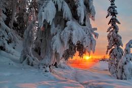снег / Зима, и на деревьях красота, Украсил дивно кроны белый иней, С души уходит быстро суета, Тона иные дарит вечер синий.