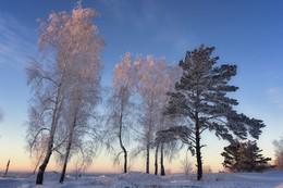 Зимний свет. / ***