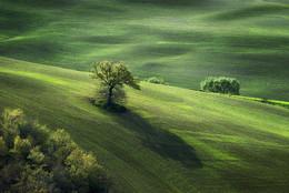 Tuscany / Tuscanian landscape near Pienza