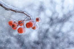 Зимний этюд / После ледяного дождя