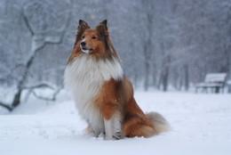 Преданность / Прогулка в Парке Дружбы в снегопад