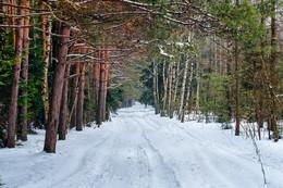 Просто лес) / Простая прогулка по лесу. Камера Фуджи Х-А1. Объектив MC Zenitar-M2s 2/50