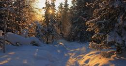 Мороз и солнце день чудесный / Описание