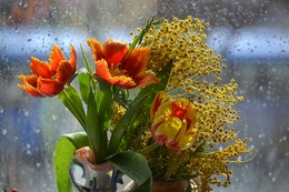 Тюльпано - мимозовый рай. / 8 марта.