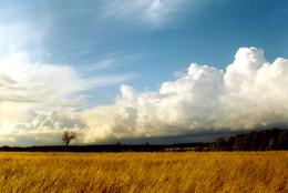 Заметки на полях / ...ясень у поля