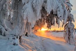 Долгие Сибирские зимы... / Засмотревшись на заснеженные ели, солнце от блаженства заалело и залило благодатным светом ветви-лапы и ручей при этом.