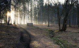 Апрельское утро в Ясной поляне. / ***