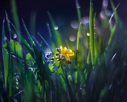 Пробуждение / В малом цветке  Немного красоты -  Много любви.  (Хатори Хасо)