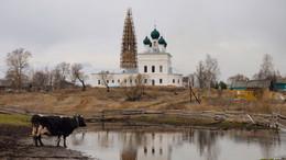 Без названия / Да, без гусей, но есть корова, грустная такая. Село Ясенево Ярославской губернии.