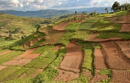 Лоскутное покрывало / Снимок сделан в Уганде в ноябре 2014 года.