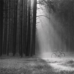 Портретик для велосипеда. / Всех благ!