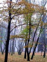 Осеннее утро в парке / нет комментария