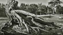 Буйство корней / На Финском заливе