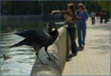 Перепало нахаляву / Вот такая птичка встретилась в Парке Горького в прошедшее  воскресение. Приятного Всем просмотра.