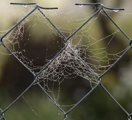Рабица как матрица / Паутинки на заборе