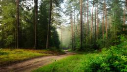 Сосны / Природа Беларуси