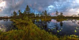 Северное лето, или пасмурный рассвет. / Работа сделана во время проведения фототура по болоту Ленинградской области. Провожу фототуры по болотам области. Подробности здесь https://vk.com/topic-69994899_34443257 Север Ленинградской области. Июнь, 2016.