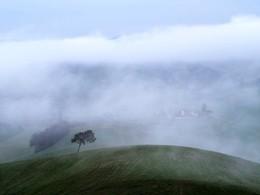 Кедр или сосна в поле у Torrenieri утром весной / Кедр или сосна в поле у Torrenieri утром весной
