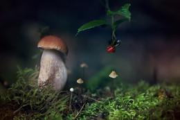 по соседству.. / ..в лесу..