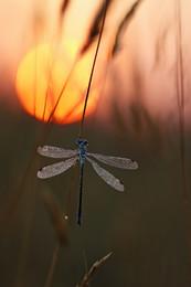 Лишь солнца первые лучи... #2 / рассвет