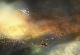 ..поймать солнце.. / ..осень..