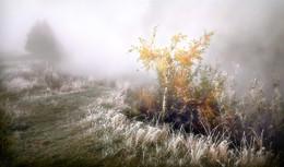 Осенние туманы.. / ***