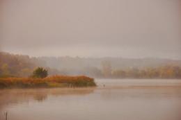 Цапли на пруду. / Туманное утро на пруду.