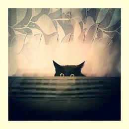 Жизнь в монохороме / ...owl?...