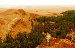 Оазис / Северная Африка
