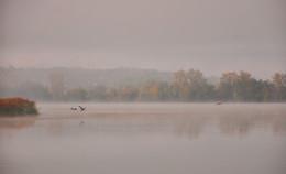 Цапли на озере. / Туманное утро на осеннем озере.