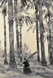 инок / снимал в Израиле. пленка