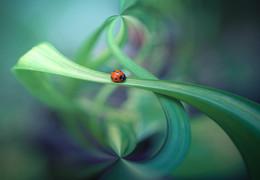 ladybug / sony nex7 e30macro