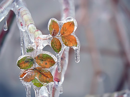 Icy Hug / обледенение... :)
