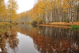 Тихая осень. / Осень на лесном озере.