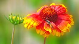 ах лето.... / клумба, лето, пчелки кругом, приятно смотреть