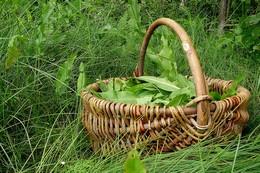 вспоминая о весне... / что тут ещё скажешь - щавлик :)