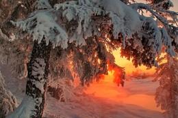 вечерний мороз / Иркутская область Казачинско-Ленский район вечерний морозец - 35