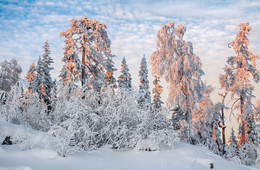 Сказочный лес / Зимняя сказка