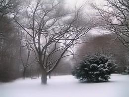 / В парке зимой...
